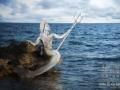 Sirena de los mares